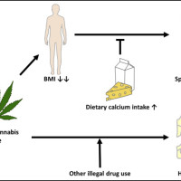 Models of mediation and moderation analyses. Models of used for PROCESS to theoretically assess mediation and moderation of the effects of heavy cannabis use on bone mineral density outcomes.