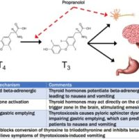 Possible pathophysiology of thyrotoxicosis-induced vomiting.